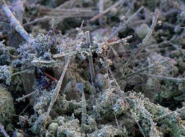 домашняя пыль под микроскопом
